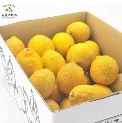 レモン・オレンジ訳あり通販【格安で人気】国産無農薬も紹介 バレンシアニューサマーも